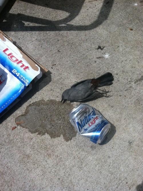 Someone had a rough night.