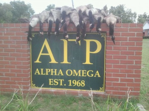 Early Goose Season in The Commonwealth. TFM.