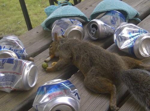 Squirrel bid.