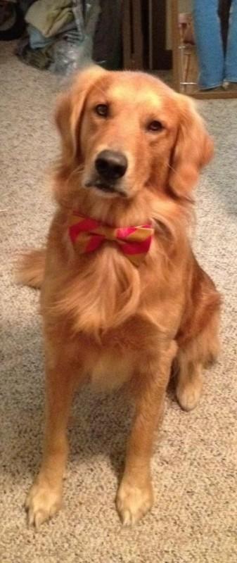 Frathound's new bow tie.
