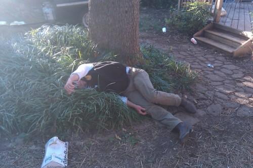 Do bushes make a good beds?
