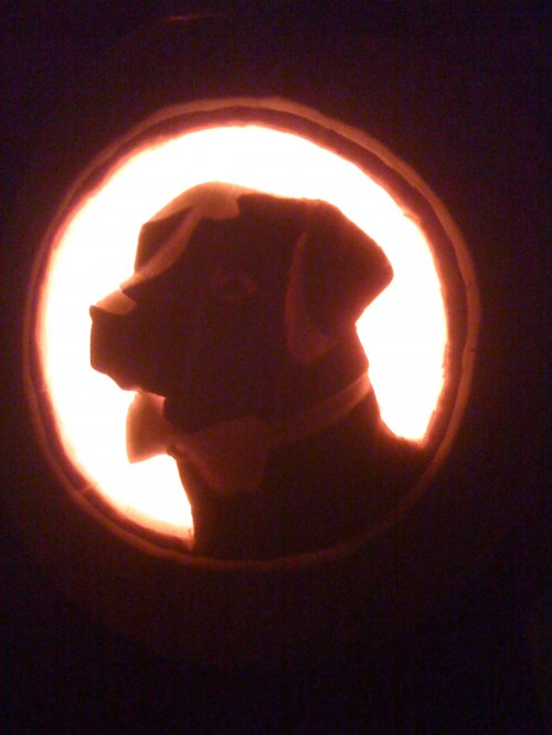 In memory of the best frat hound.