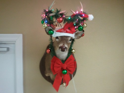 Fuck decorating the house, we decorated the deer.