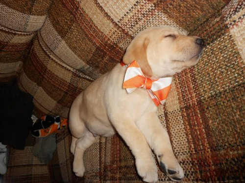The new frat pup already knows how to dress.  TFM.