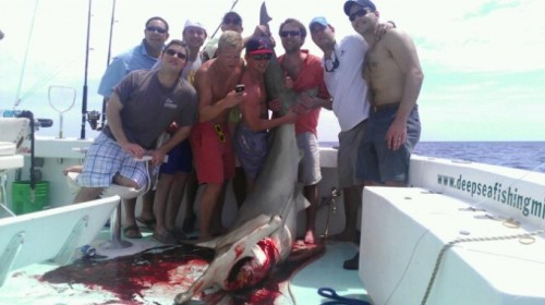 Dominating an 11ft Hammerhead. TFM.