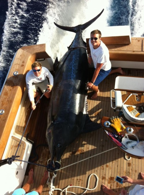 Catching the 5th biggest Blue Marlin in the Atlantic. TFM.
