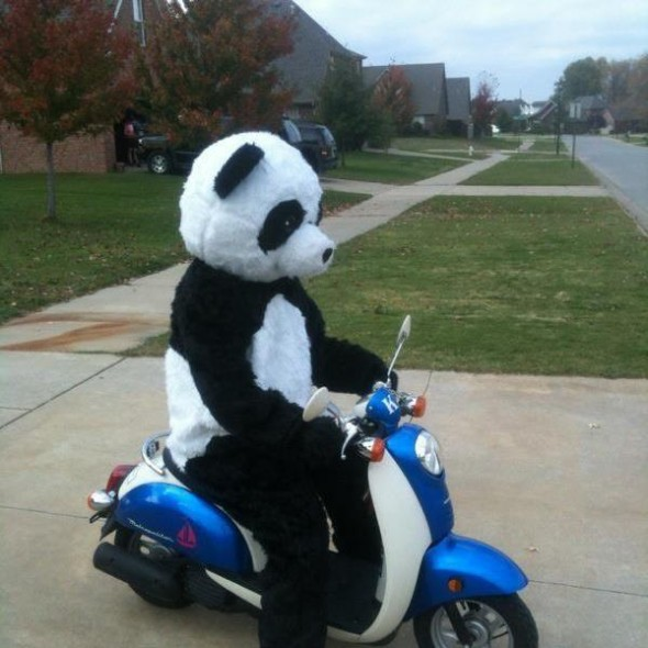 Panda pledge. TFM.