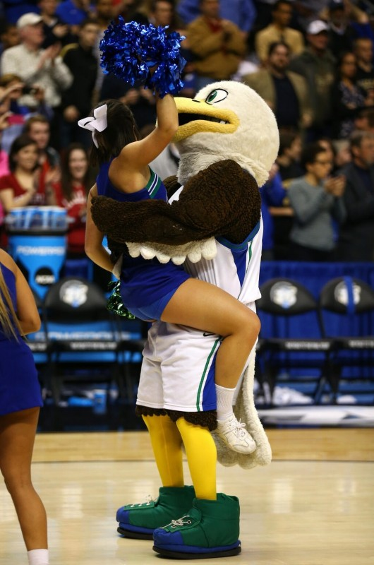 FGCU mascot getting a slam after the big win. TFM.
