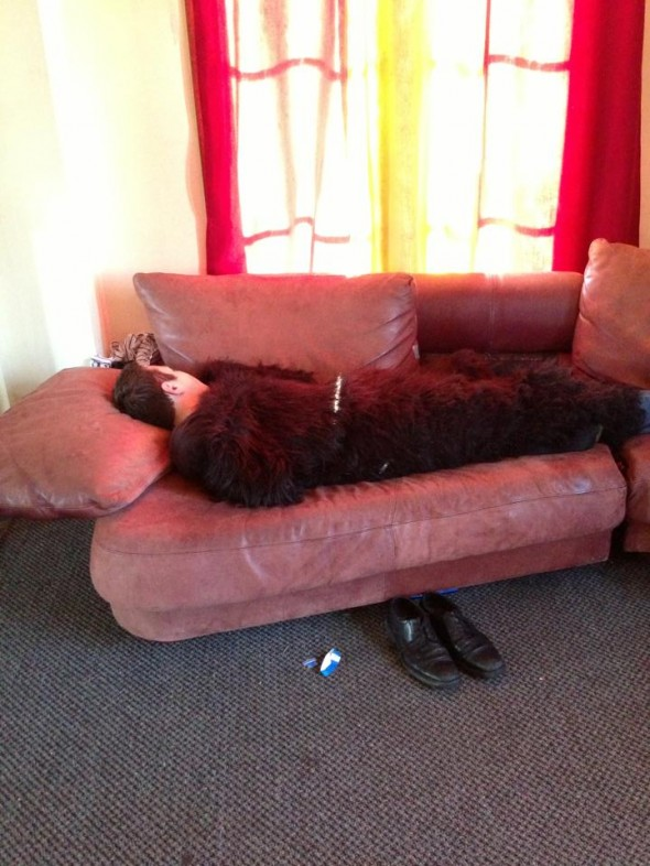 Casual blackout nap in a gorilla suit. TFM.