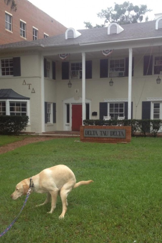The house dog knowing when he's in enemy territory. TFM.