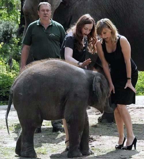 This elephant. TFTC.