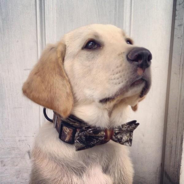 Camo bow tie collar. TFM.