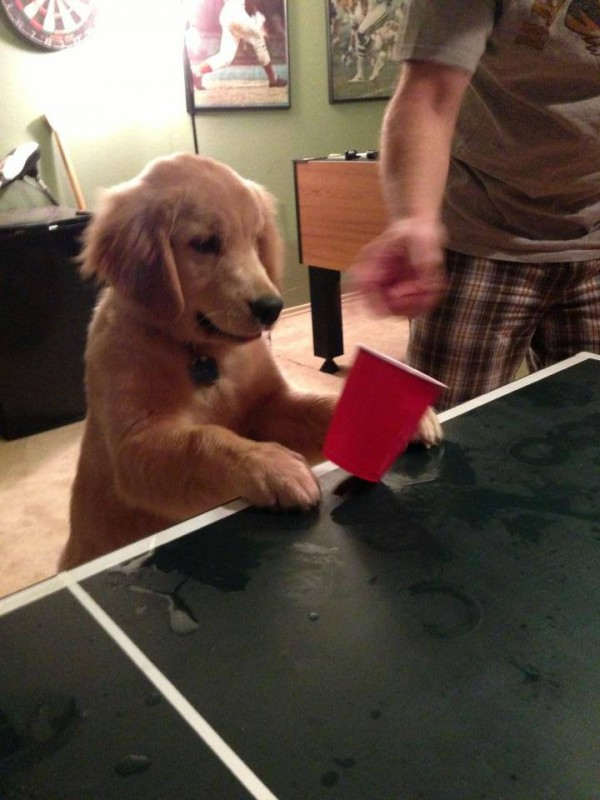 Teaching the frat hound to play flip cup. TFM.