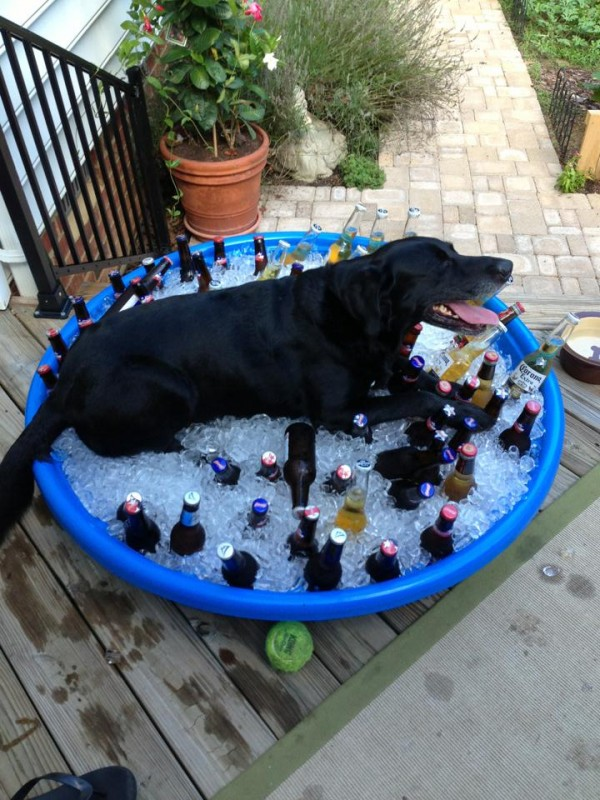 A true guard dog. TFM.