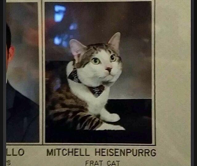 Hahaha Heisenpurrg.