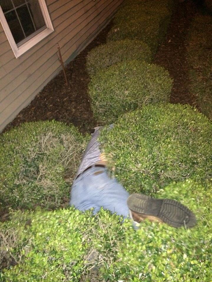 He's a fan of the bush.