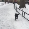 Guy Laughs At His Dog Slipping On Ice, Promptly Slips On Ice, Gets What He Deserves
