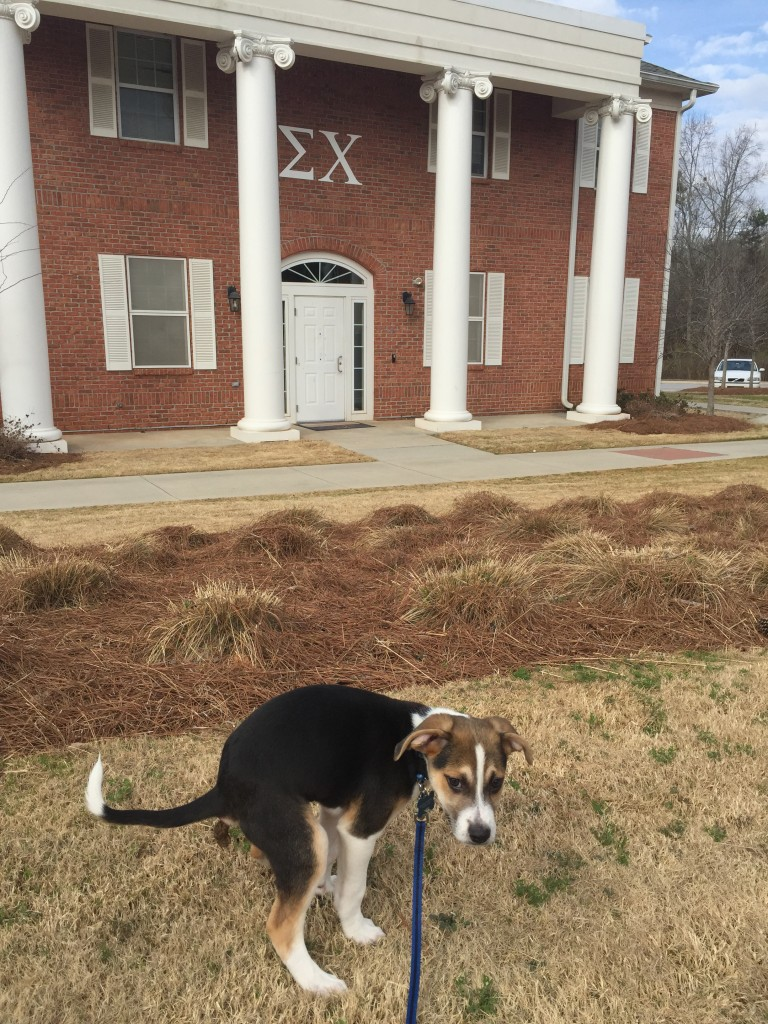 Having the frat hound take a dump on your rival's lawn. TFM.