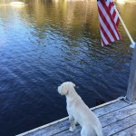 Frat hound, summer, and America. TFM.