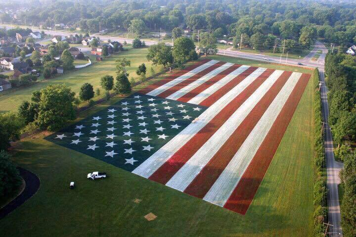 Having the most patriotic yard in Kentucky. TFM.