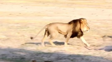 Remember When You Pretended To Care About Cecil The Lion?
