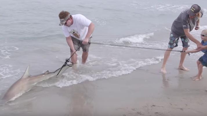 Surfer Kills Shark