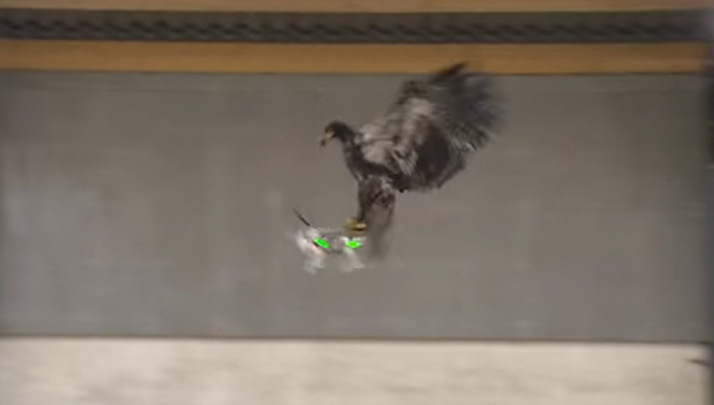 Drone-Killing Assault Eagles Exist And America Needs Them Now