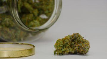 marijuana stoner hospital