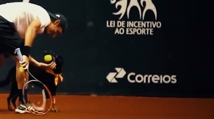 brasil open rescue dog shag balls