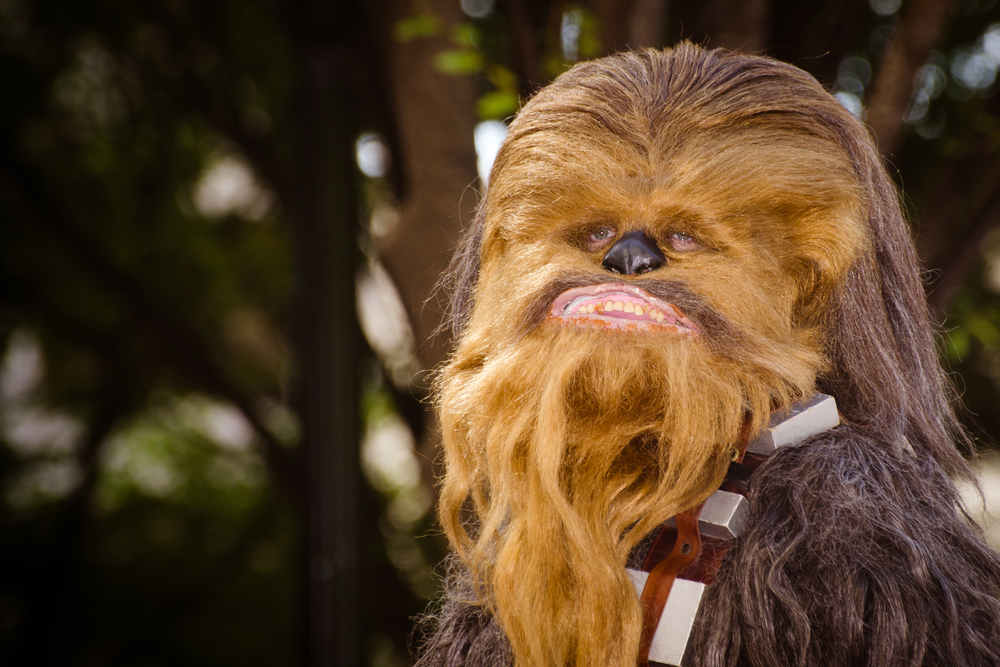 star wars day chewbacca