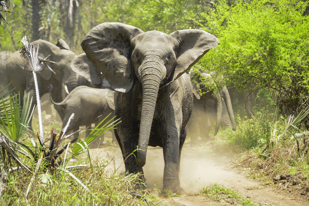 elephant killed big-game hunter