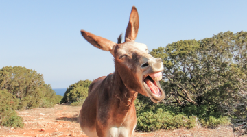 donkey chinese zoo investors