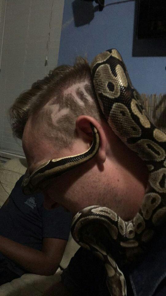 You shameful snake fucker.