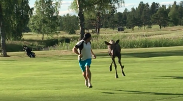 golf course moose man