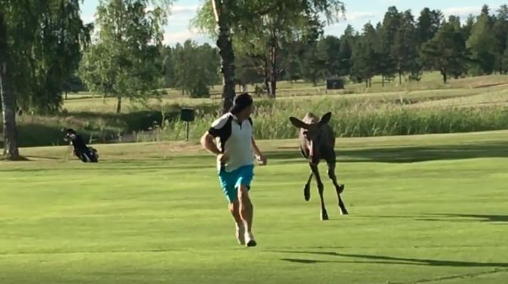 golf course moose man