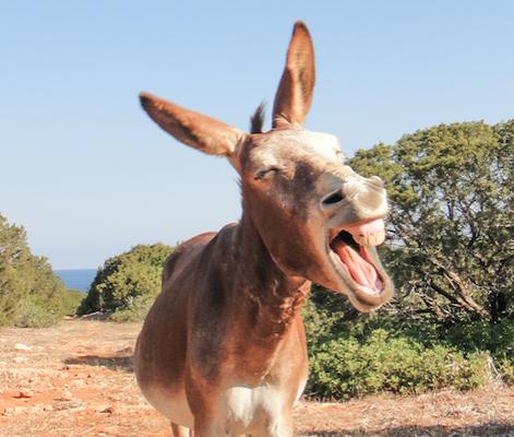 frat donkey
