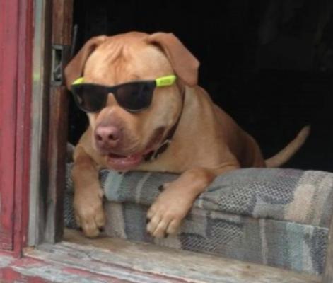 frat hound