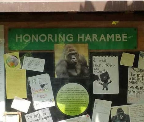 harambe's death two years later